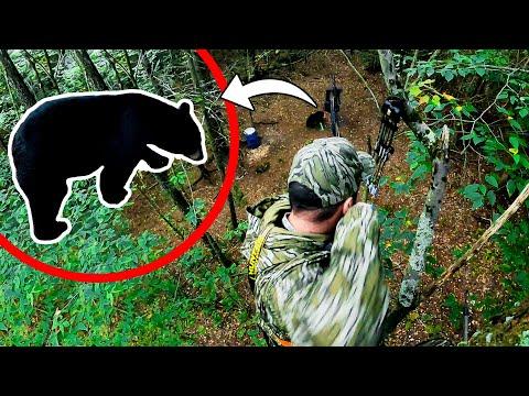 BIG BEAR With a Bow   New Hampshire Bear Hunt