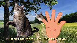 Funny Dogs Cats Finger Family Nursery Rhymes | Funny Little Babies Colors Cats Finger Fami