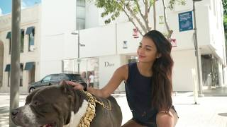 Big Dog Chains | Unique Custom Dog Collars