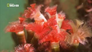 видео что такое кораллы
