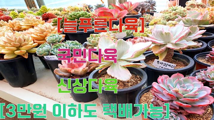 [늘푸른 다육] #국민다육#신상다육#3만원이하택배가능