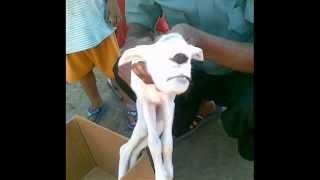 Repeat youtube video Fotos de Animales deformes   奇形動物たちの写真 環境汚染・放射能
