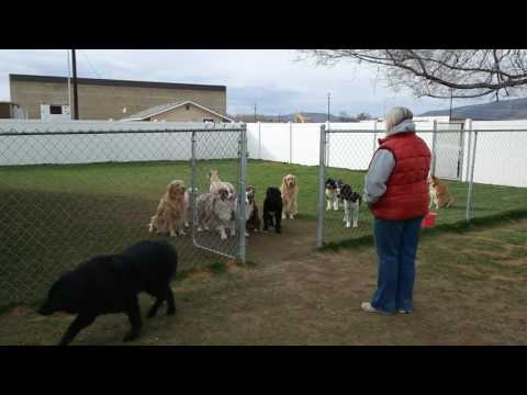 Dogs Wait Patiently At The Gate Until Their Names Are Called
