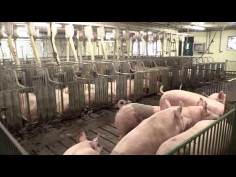 Swine Farm Virtual Tour