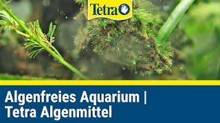 Algenfreies Aquarium I Mit TETRA Algenmitteln