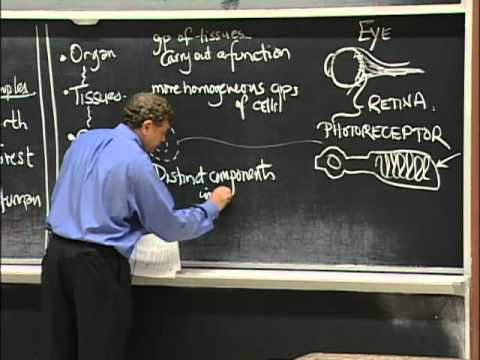 Types of Organisms, Cell Composition, excerpt 1   MIT 7.01SC Fundamentals of Biology