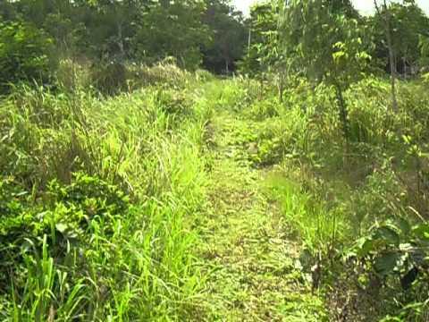 ตัดหญ้าในสวนใช้รถไถเล็กคุ้มค่าที่สุด