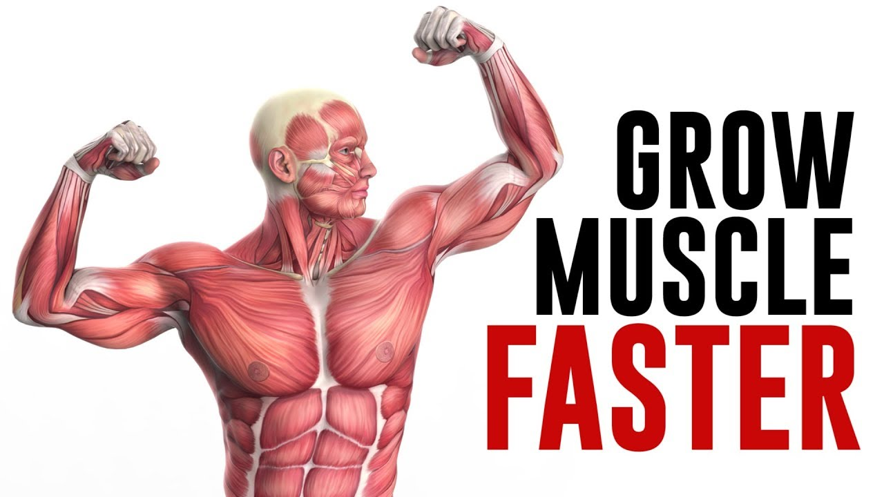 How to Grow Muscle FASTER! Key Factors to Build Muscle Explained ...
