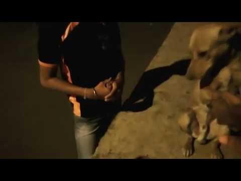 """Friendly stray dog - """"homeless dog"""