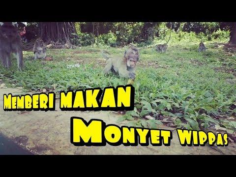 wisata-ke-wippas-||-kasih-makan-monyet-||-liburan-sekolah-||
