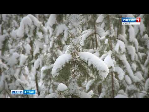 Вопрос: Откуда в ленточных борах Алтайского края появились медведи?