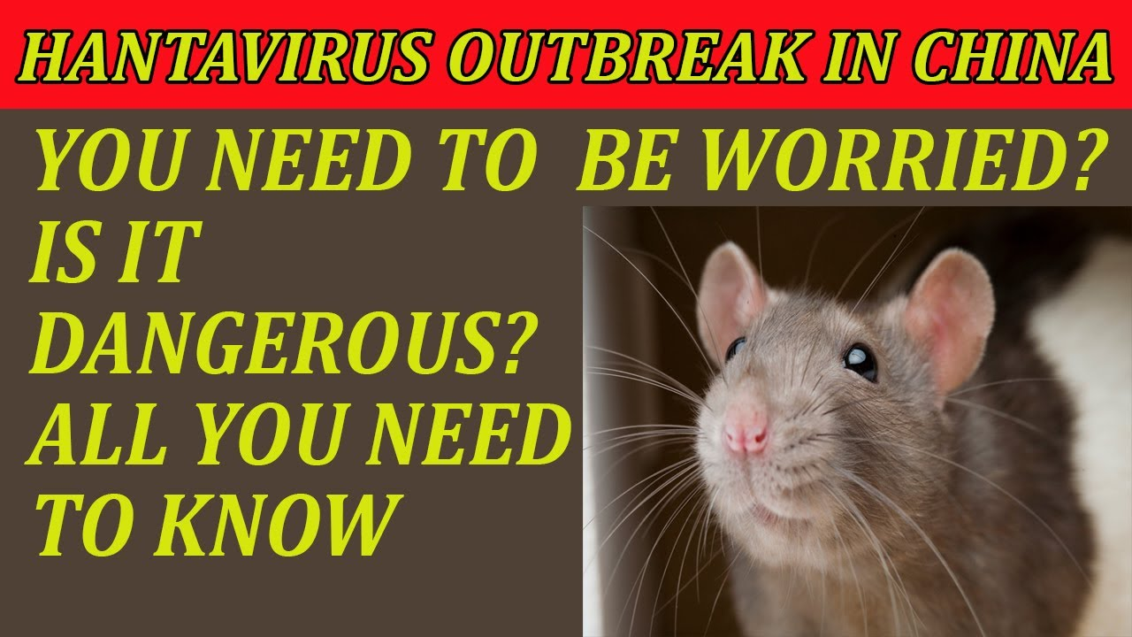 HantaVirus China Outbreak - How It Spreads - Do You Need To Worry ...