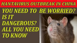 Hantavirus China Outbreak   How It Spreads   Do You Need To Worry?