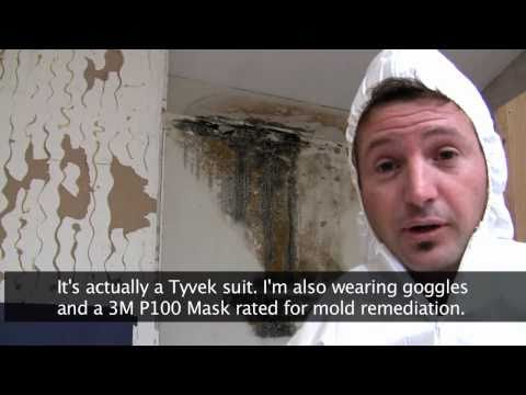 killing-toxic-black-mold---how-to-remove-mold-safely