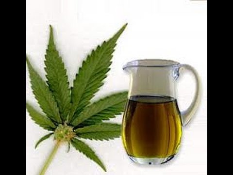 Cannabis Oil Treatment Of Cancer