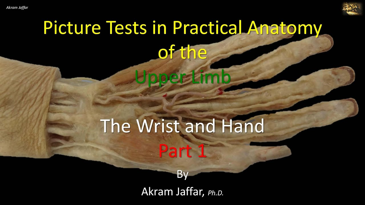 Picture Test In Anatomy Wrist And Hand 1 Youtube