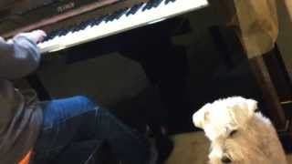 Liszt's Erlkönig Performed By Pianist Lee Chu And Vocalist Cookie, The Mini Schnauzer