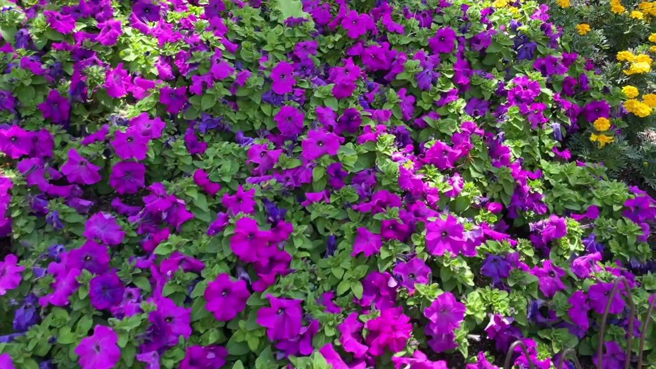 A Spring Fling at Roger's Gardens!