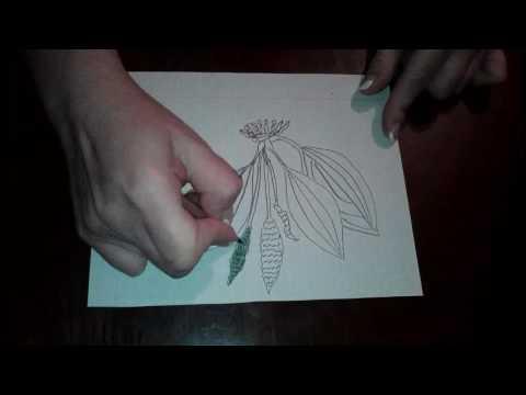 Как нарисовать подорожник карандашом