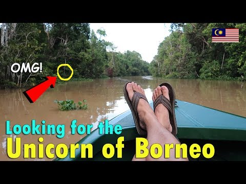 WOW! LOOKING FOR THE UNICORN OF BORNEO | June 26th, 2017 | Vlog #151
