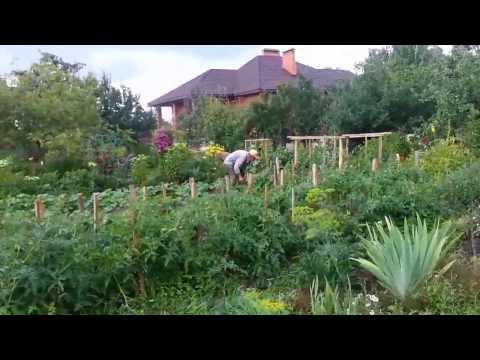 Мой деревенский огород