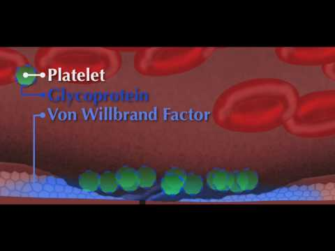 Von Willebrand factor (vWF) Animation