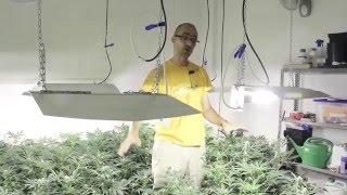 Marihuana Al Natural - 4 Indoor optimizado