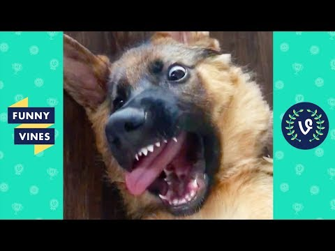 TRY NOT TO LAUGH – Funny animals to brighten up your day!