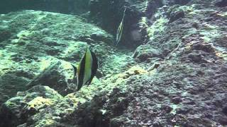 Snorkel Hawaii 2012 Thumbnail