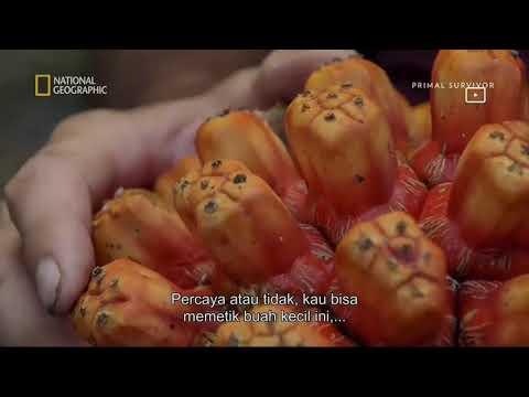 Primal Survivor S2 Eps 5 - Killer Seas (2017) National Geographic Indonesia
