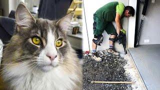 Кота случайно замуровали под бетонным полом на 2 недели