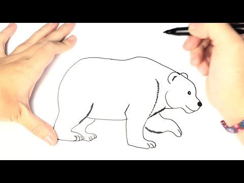 How to draw a Polar Bear for Kids