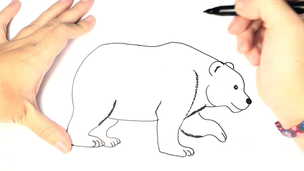 How To Draw A Polar Bear For Kids Youtube