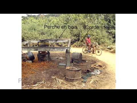 Agriculture familiale et palmier à huile