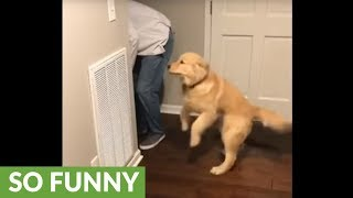 "This puppy does a ""happy dance"" when it's dinner time!"