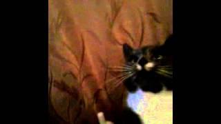 котенька и дыня
