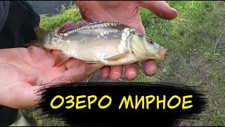 Рыбалка Кемерово 2020 Озеро МИРНОЕ КАРП ОКУНЬ КАРАСЬ