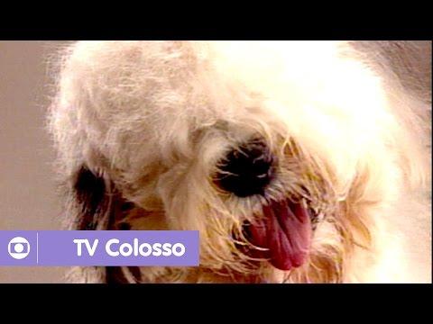 COLOSSO TV BAIXAR PRISCILA MUSICA