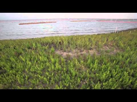 SNAP Coastal Defenses: Reducing Risk with Nature