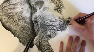 Pointillism Elephant encrusted with Crystals Time Lapse