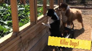 Enthusiastic Dachshund & Trapped Squirrel #10