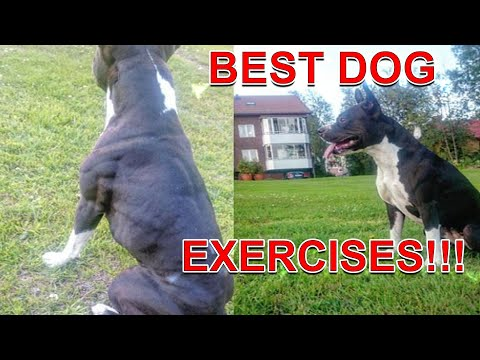 Best Exercises For Your Dog - Fit And Healthy!