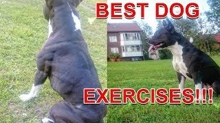 Best Exercises For Your Dog  Fit and Healthy! (Dog Exercises and dog workout)