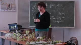 Wykład - Dendrologia wersja skrócona
