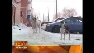 Когда в Иркутске начнётся отлов бездомных собак, до сих пор неизвестно.(, 2014-03-06T03:54:47.000Z)