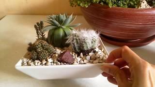 Обзор фитокомпозиций (новых и старых). Подбор ёмкостей для посадки суккулентов: кактусы в салатнице