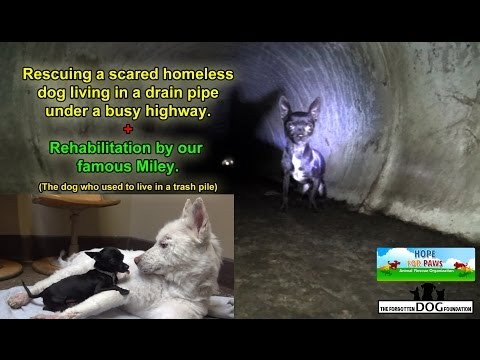 Rescuing a scared homeless dog living under a busy highway - Please SHARE so we can find him a home.