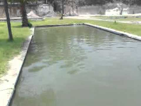 Cultivo de peces youtube for Piscinas para tilapias