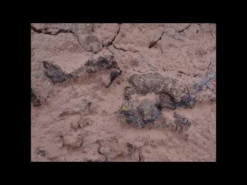 Cryptobiotic Soil Crust in the Desert