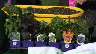 Here are some potted gardening tips for beginners